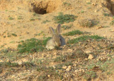 conejoadri (1)