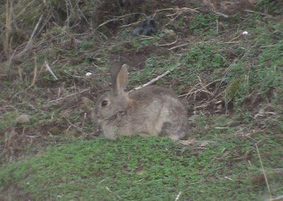 conejoadri